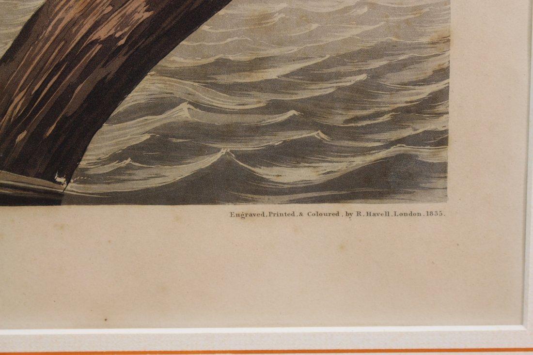 J.J. Audubon  (1785 - 1851)  Engraving - 5