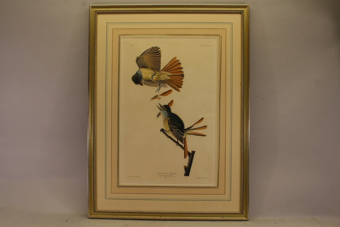 J.J. Audubon  (1785 - 1851) Hand Colored Engraving