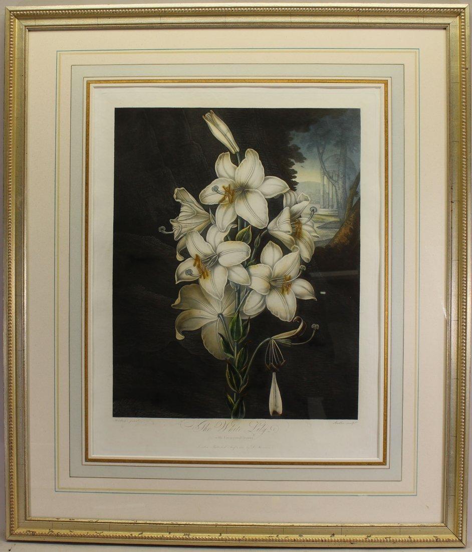 """White Lily"" Antique Framed Floral Engraving"