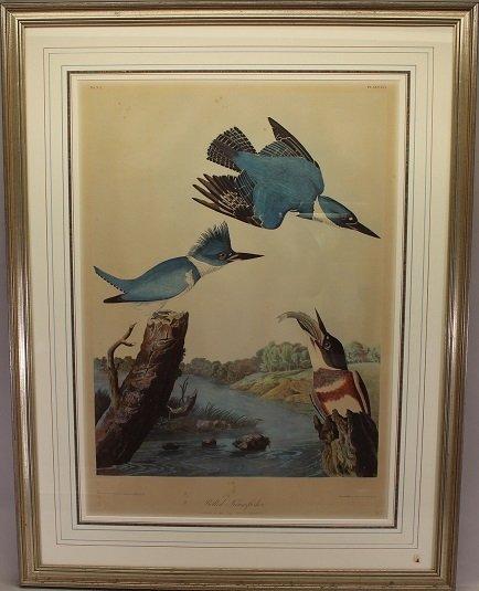 JJ Audubon  (1785 - 1851) Chromolithograph