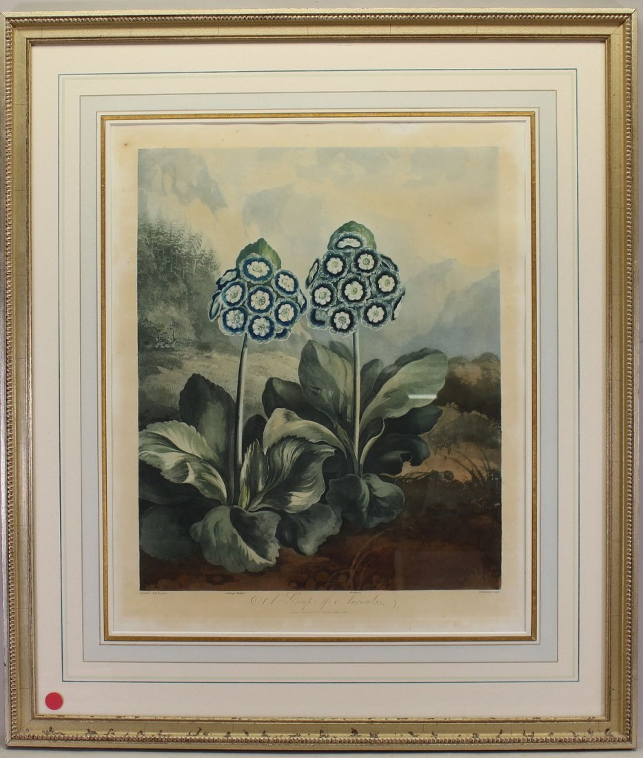"""""""A Group of Auriculas"""" Framed Antique Engraving"""