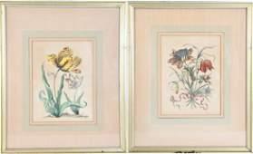 Pair of M.S. Merian Hand-colored Engravings