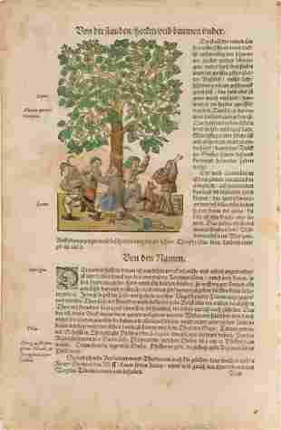 COLLECTION OF BOTANICAL GRAPHICS German, 16th century.