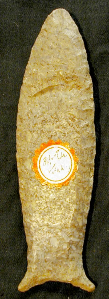2003: Cumberland 3 3/8 Inch Fossil Chert