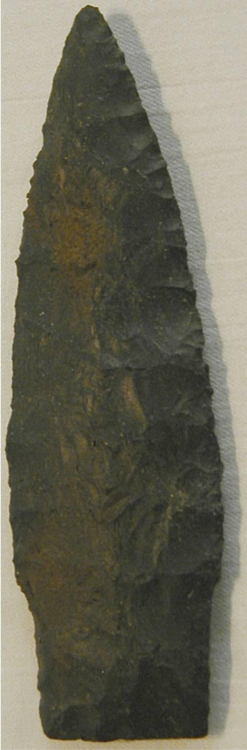 "4019: Lancelot Stem 4"", Noble County, Ohio, Black Cosho"
