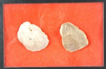 2018: Two Unfaced Paleo Hand Axes