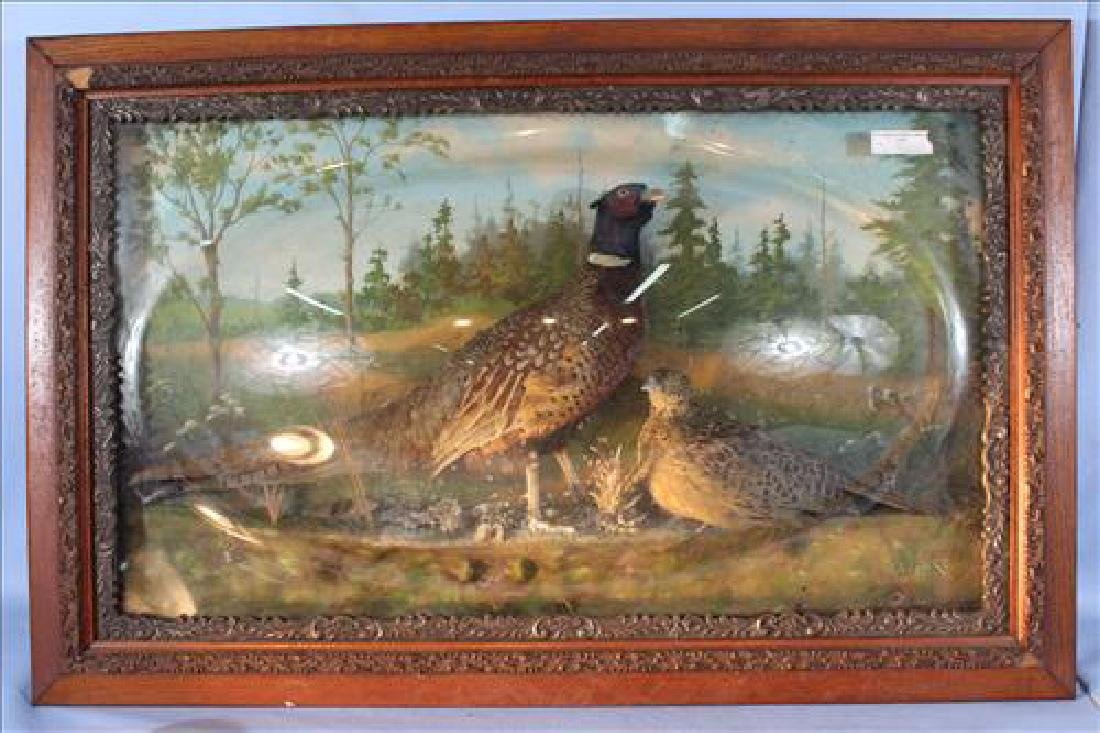 Lg. oak frame with 2 mounted pheasants under glass