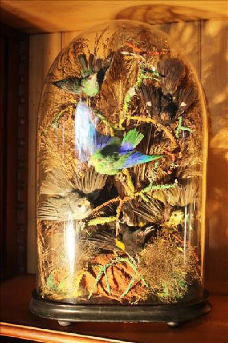 Pair large Victorian domes w 5 birds sitting in a bush,