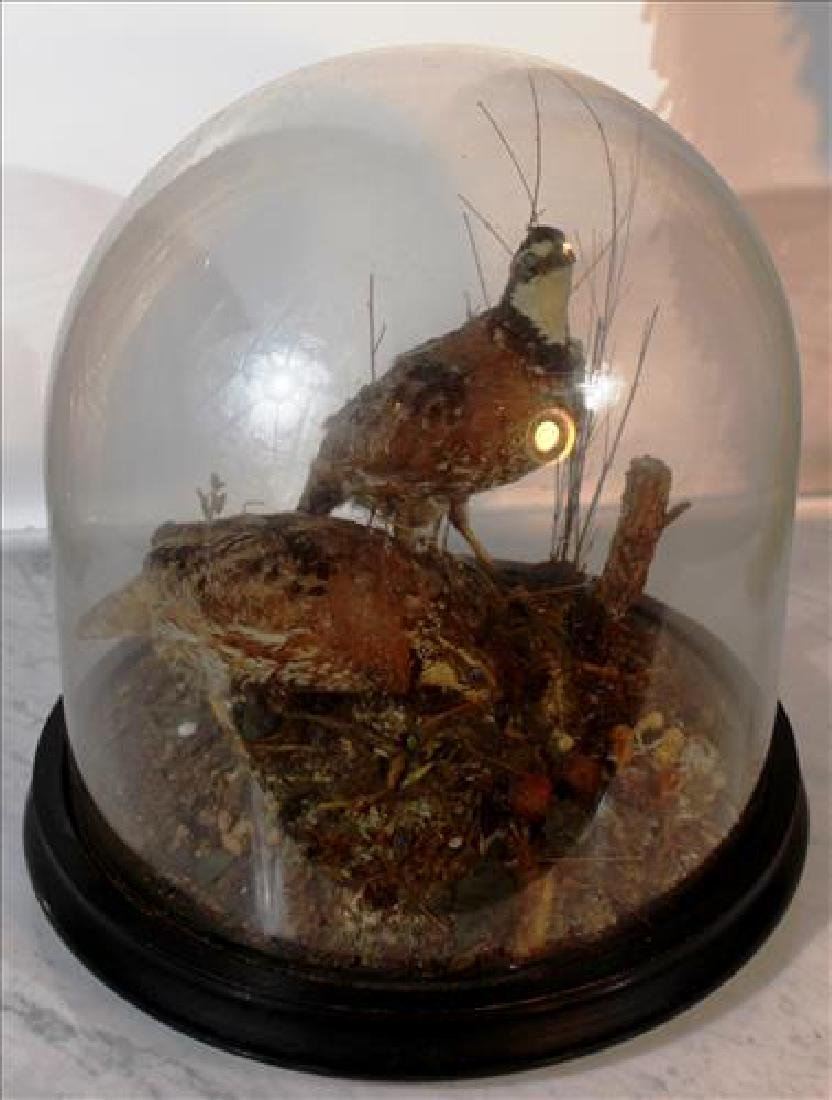 Victorian oval glass dome w two stuffed pheasants 13in