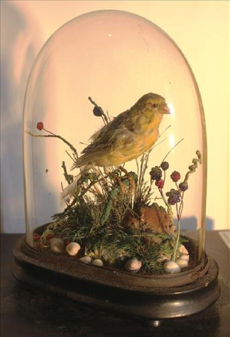 Small Victorian dome with a bird, 9T