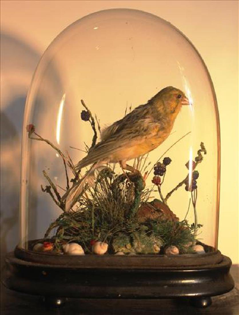 Small Victorian dome with a bird, 9T - 2
