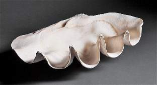 Giant Clam Half Shell