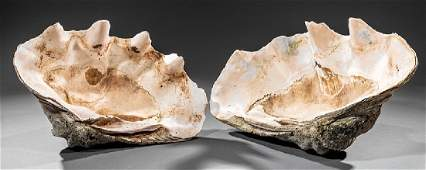 Two Giant Clam Shells