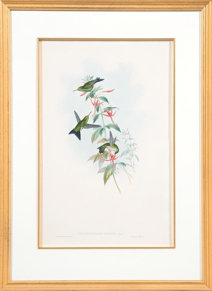 John Gould (English, 1804-1881) - 2