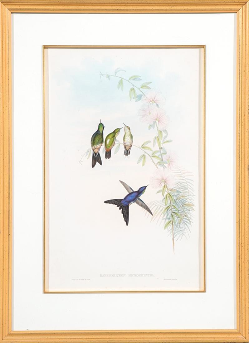 John Gould (English, 1804-1881) - 3