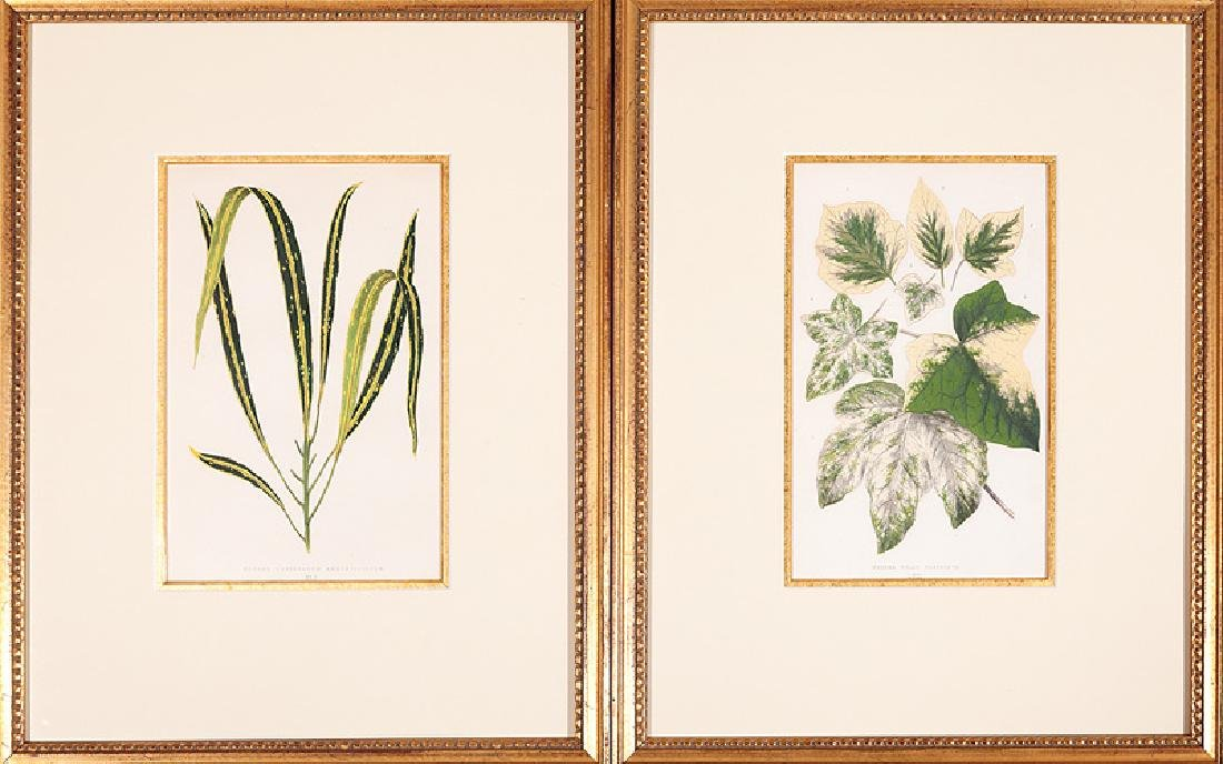 Ten Antique English Botanical Prints