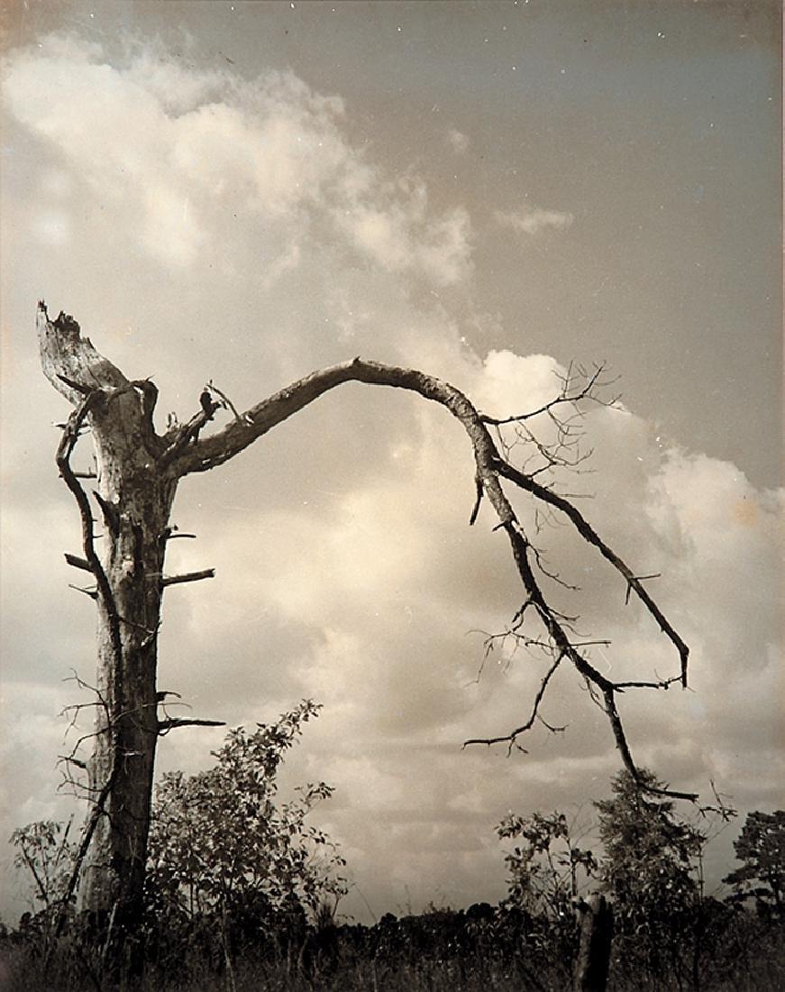 Carolyn Ramsey (American/Louisiana, 20th c.)