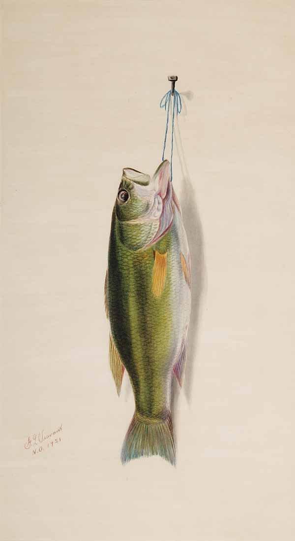 """0443: George Louis Viavant,""""Nature Morte: Green Trout"""""""
