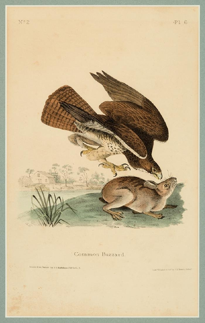 John James Audubon (American, 1785-1851) - 2