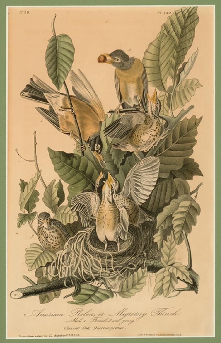 John James Audubon (American, 1785-1851) - 3