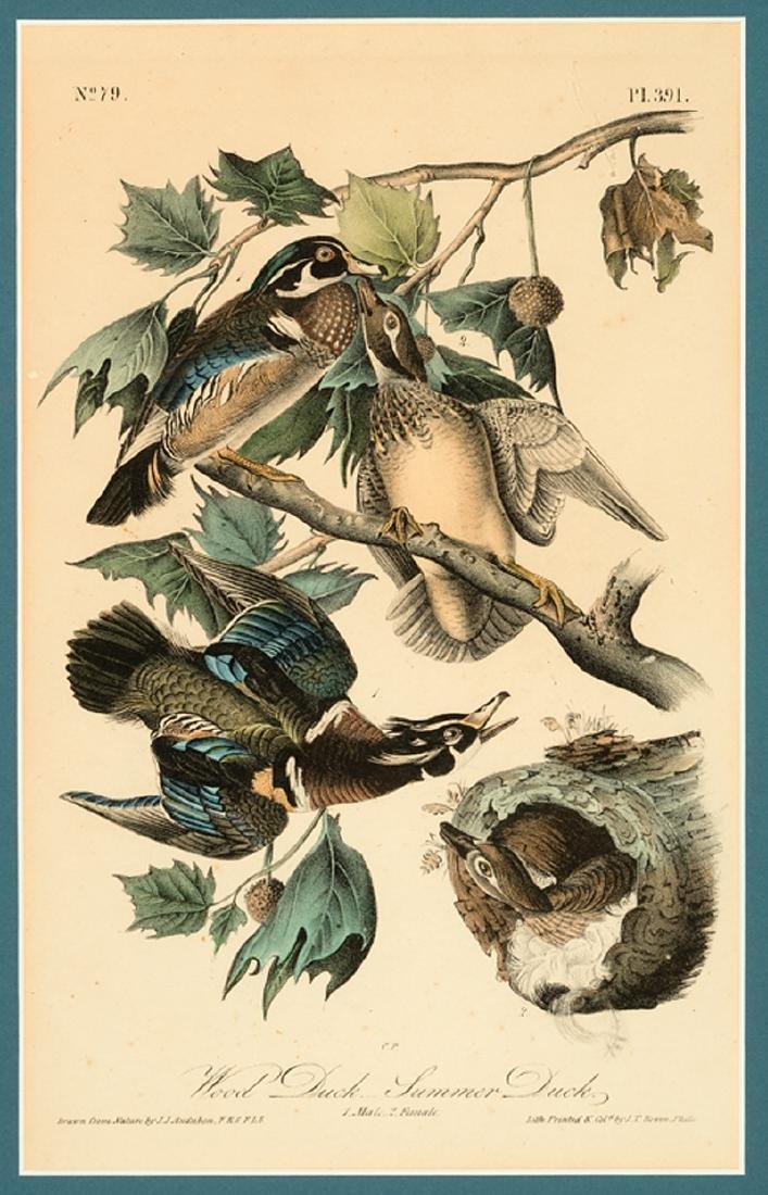 John James Audubon (American, 1785-1851) - 4