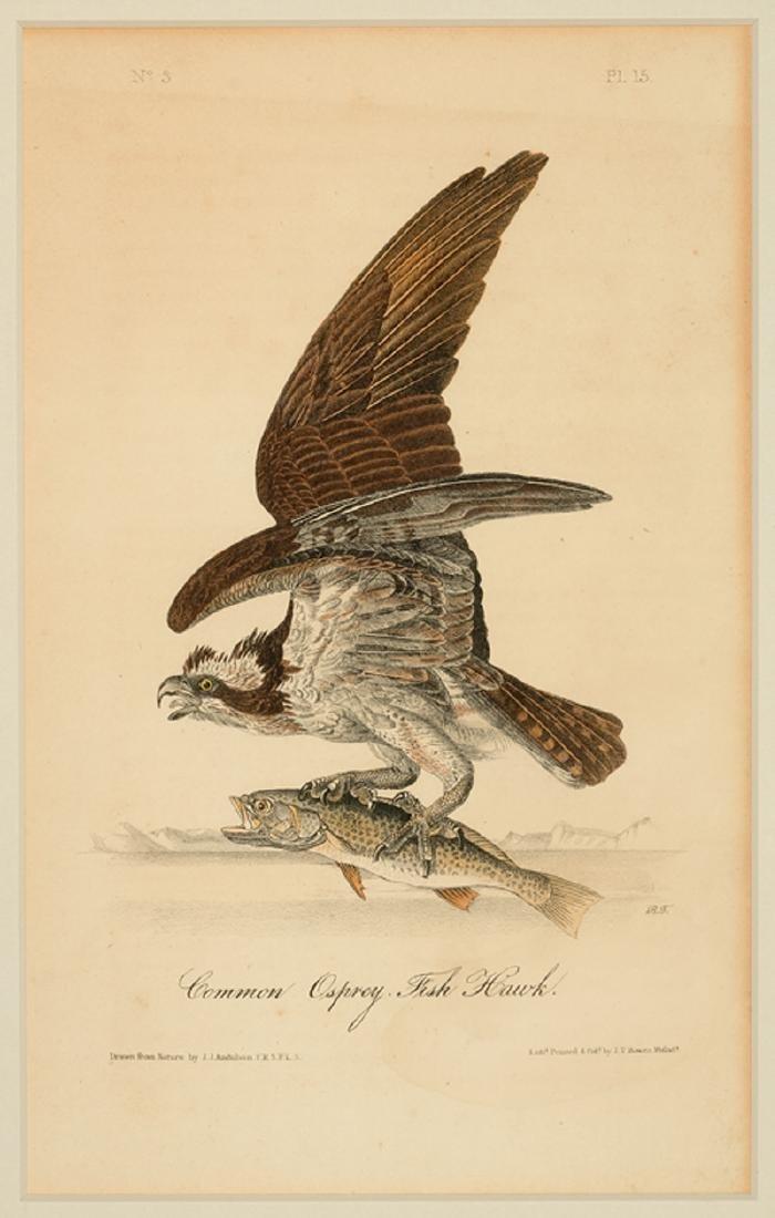 John James Audubon (American, 1785-1851) - 5