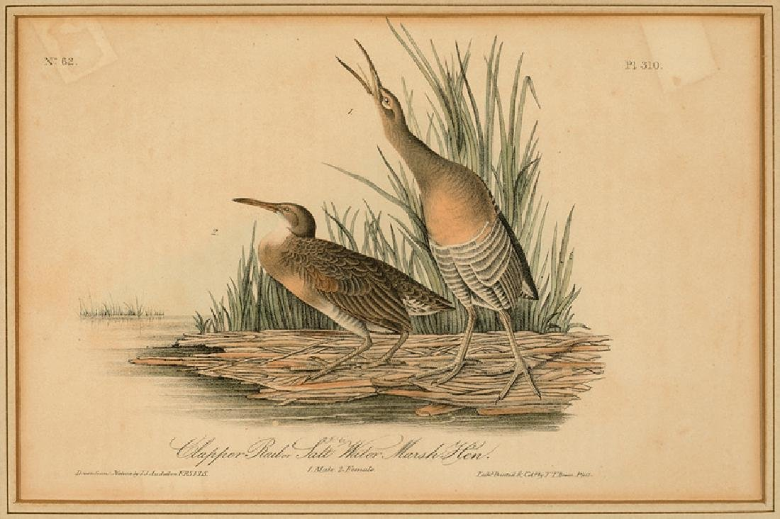 John James Audubon (American, 1785-1851) - 6