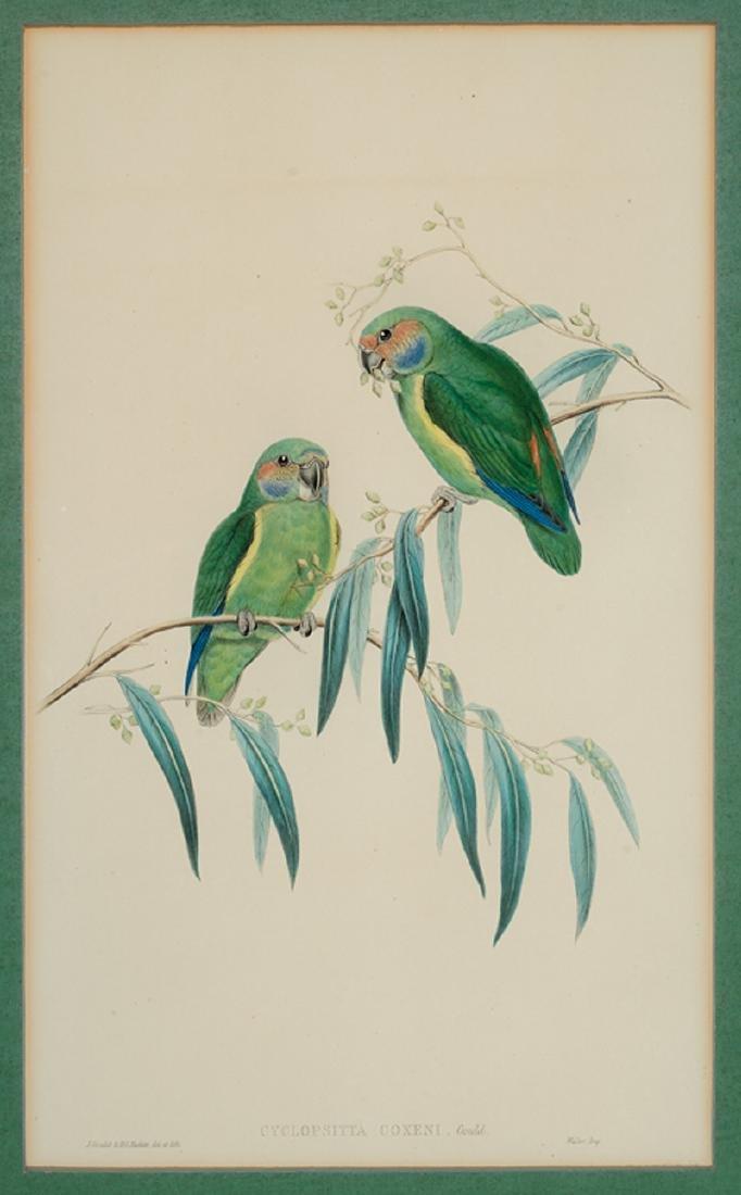John Gould (British, 1804-1881) - 2