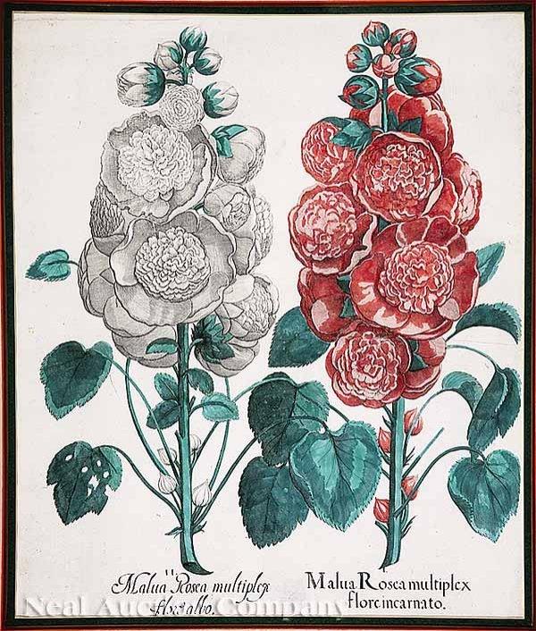 3: Pair Hand-Colored Engravings after Besler