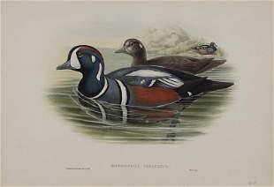 John Gould (British, 1804-1822)