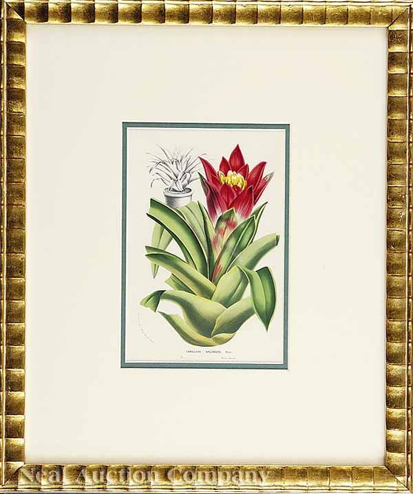 5: Louis Van Houtte, eight Lithographs