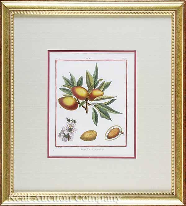 6: Duhamel du Monceau Eight Engravings of Fruits