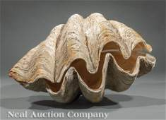 Rare Complete Monumental Giant Clam Shell