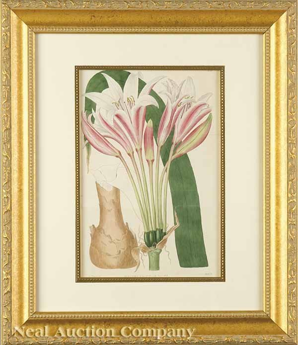 12: Four Antique Botanical Prints