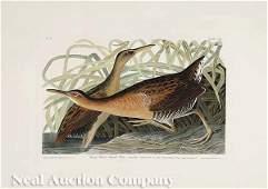 0365: After John James Audubon (American, 1785-1851)