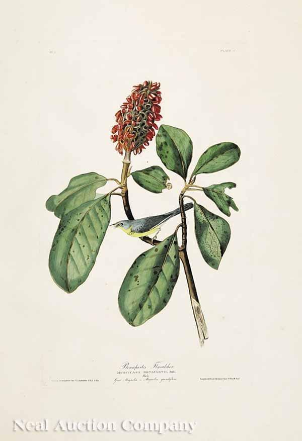 0370: After John James Audubon (American, 1785-1851)