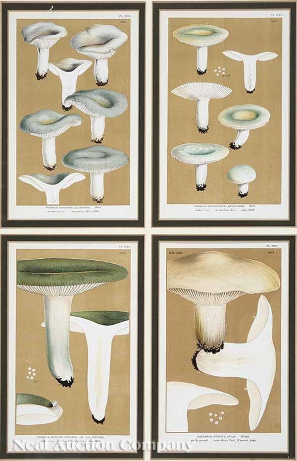 0649: Four Antique Chromolithographs of Mushrooms
