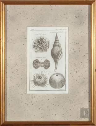 Two Natural History Prints, 18th/19th c