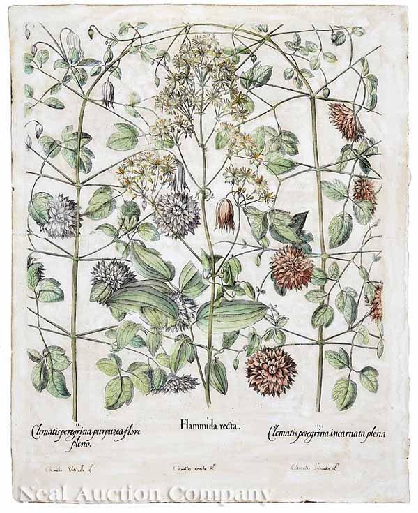 0020: Basilius Besler (German, 1561-1629)