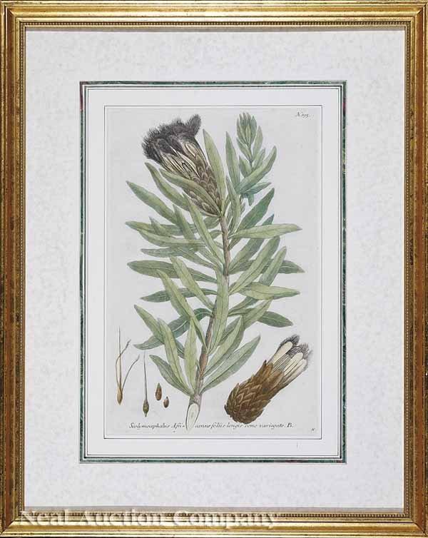 0018: Johann Wilhelm Weinmann Botanical Prints