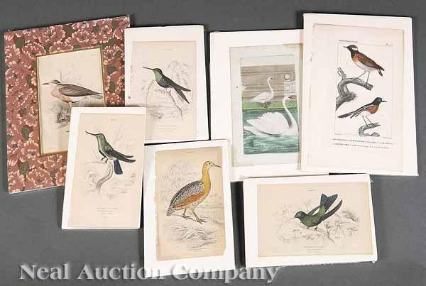 0020: More Than 100 Hand-Colored Natural History Prints