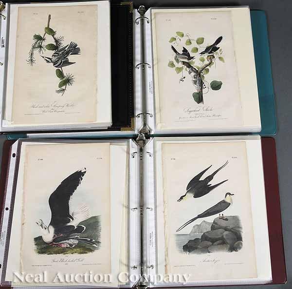 0021: After John James Audubon (American, 1785-1851)