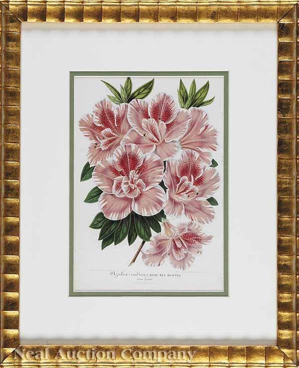 0942: Eight Antique Botanical Prints of Azaleas