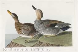 0224: After John James Audubon (American, 1785-1851)