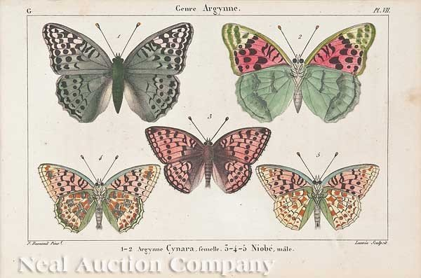 0684: Seven Hand-Colored Engravings Butterflies & Moths
