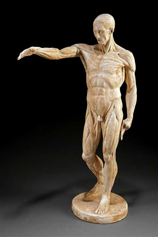 Fine Antique Plaster Anatomy Figure