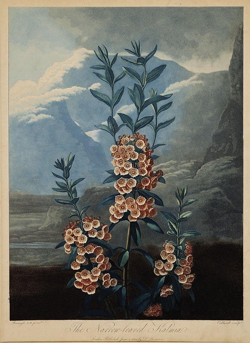 Dr. Robert John Thornton (English, 1768-1837)
