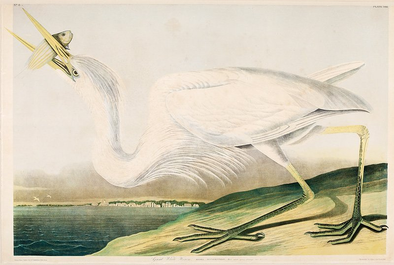John James Audubon (American, 1785-1851) - 2