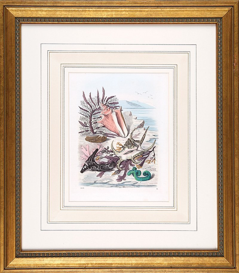 Six Hand-Colored Lithographs and Engravings - 2