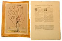 Mark Catesby, The Flamingo, Lubertus van Gerrevink